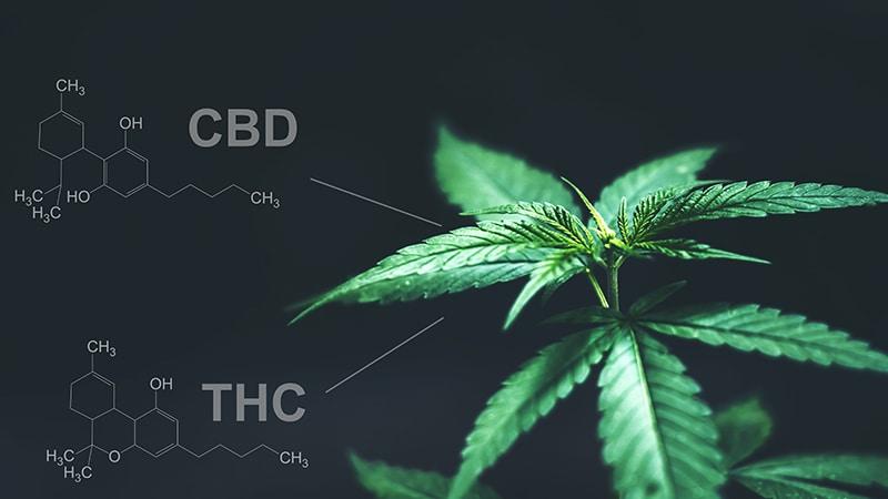 diferencias entre thc y cbd
